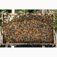 Куплю пчелопакеты пород карпатской или карника