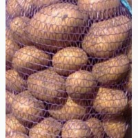 Продам картофель ОПТОМ сорт Аризона
