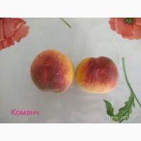 Саженцы элитных сортов персика