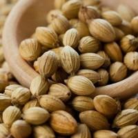 Семена кориандра PUEBLO канадский трансгенный сорт кориандра, двуручка (элита)