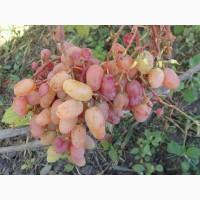 Продам черенки столовых сортов винограда