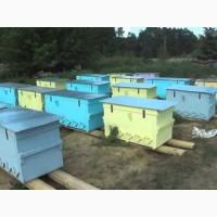 Продам улей с пчелами