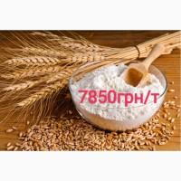 Нива Одесская пшеница