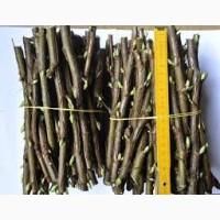 Черенок смородины Цена от 0, 50 до 1, 50грн/шт доставка наша Питомник Двірецька грядка