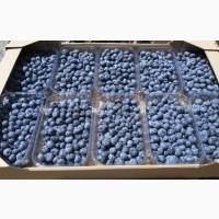 Акция Голубика Свежая Урожая 2020