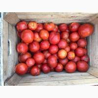 Томат/помідор на переробку
