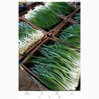 Продам зелену цибулю