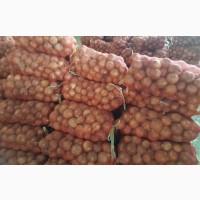 Продам лук разных сортов