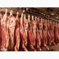 Куплю говядину (полутуши)