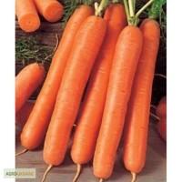 Продам семена моркови Флакке