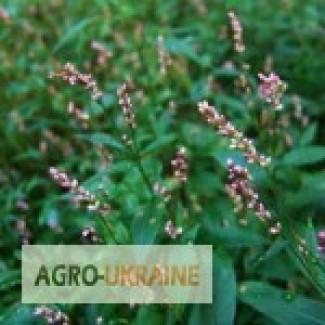 Купити водяний перець, трава