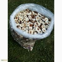 Куплю шапку білого гриба