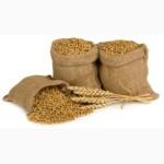 Оптовые закупки кукурузы, пшеницы, ячменя и др. зерновых и масличных культур
