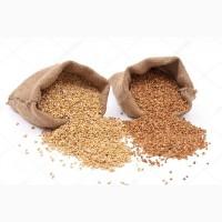 Продажа зерновых оптом