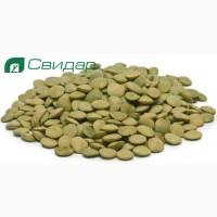 Чечевица Линза (зелёная) на посев
