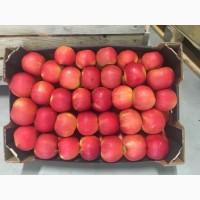 Продам яблука Фуджі, айдаред