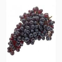 Виноград все виды из Узбекистана