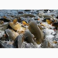 Продам рыбу по выгодной цене