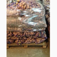 Картофель гранада цена 3 грн. размер 6+ коль-во 70 тонн качество супер