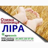 Продаем семена пшеницы Лира Одесская / элита / Агротрейд