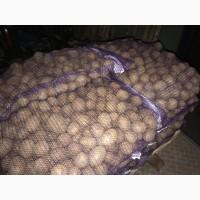Продам картошку оптом (Белоруссия)