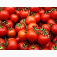 Продам помидоры из Египта экспорт, купить оптом доставка
