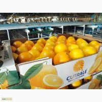Предлагаем лимон, апельсин из Бразилии