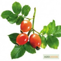Шиповника плоды 100 грамм