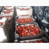 Продам клубнику малину смородину оптом с поля