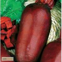 Продам семена столового буряка (Польша)