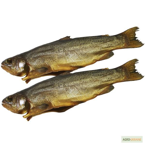куплю рыбу толстолоб