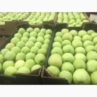 Продам яблука літні: ГОЛДЕН 2018 року