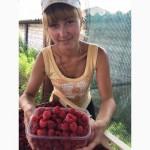 Продам ягоду малину(свежую)
