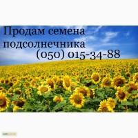 Продам семена подсолнечника, классические, под гранстар и под евролайтинг