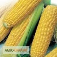 Насіння кукурудзи гібриди Монсанто ДК, ДКС ФАО 170 - 330