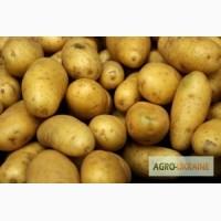 Приглашаем к сотрудничеству производителей картофеля