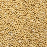 Купуємо зерно вівса, проса, гречки, ячменю, пшениця фуражна, кукуруза
