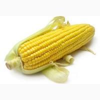 Закупка С/Х продукции.Кукуруза