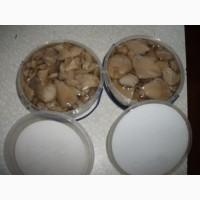 Купим грибы свежие, консервированные, соленые, маринованные все сорта