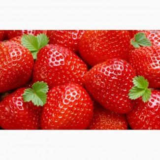Купуємо полуницю