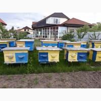 Продам улики с пчелами