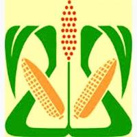 Порумбени 375 семена кукурузы