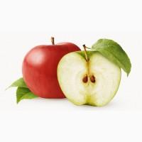 Закуповуємо яблука на переробку Дорого