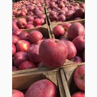 Продам яблоки сорта флорина