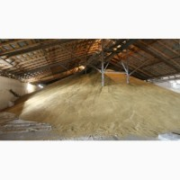 Продам пшеницу оптом от производителя
