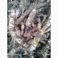 Продам корені лікарських рослин