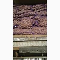 Продам товарну картоплю, 8, 20