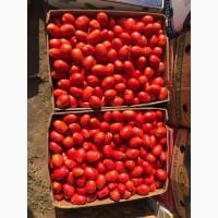Продам помедор с поля сорт 3402