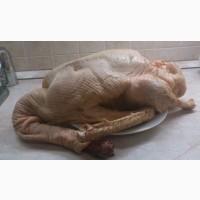 Продам тушки домашних гусей