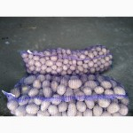 Картопля скарб бріз вектор гала